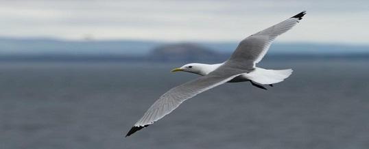 Seabird Tracking