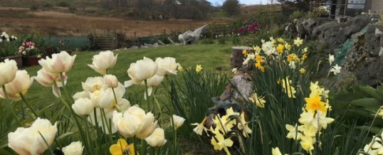 Easter on Colonsay